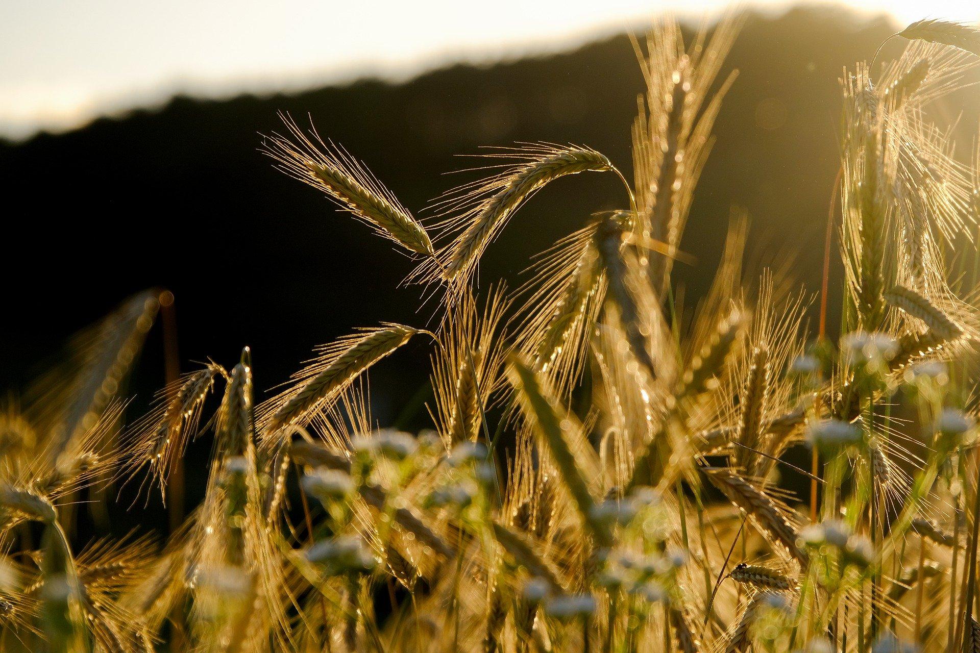 Grünes Forum: Landwirtschaft