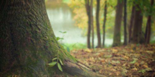 Grüne Worpswede
